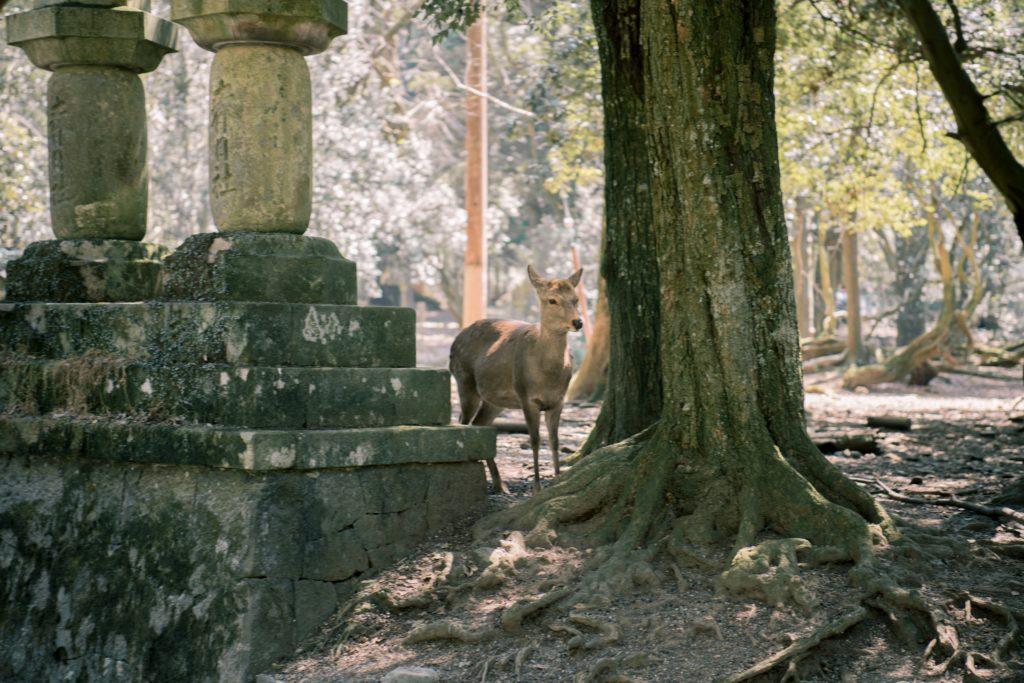 il ritorno degli animali in città ci dice di più sull'uomo che sulla natura: e ci spiega come affrontare la crisi climatica dopo il coronavirus